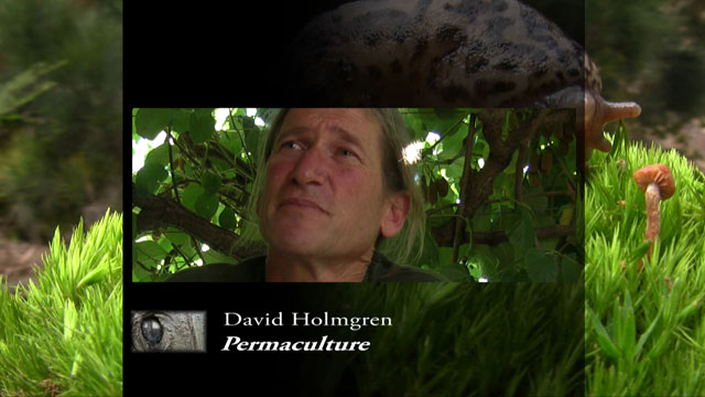 Anima Mundi screenshot David Holmgren