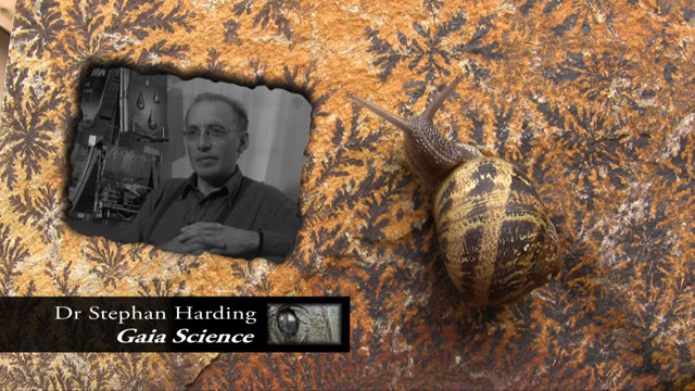 Anima Mundi screenshot Stephan Harding