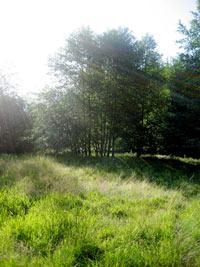 O.U.R. Ecovillage Land