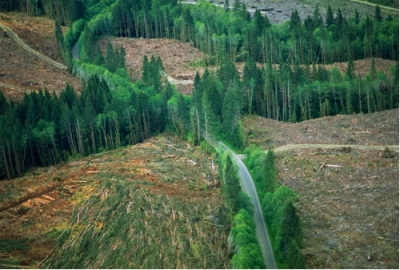 forestry clear-cut